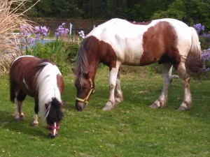 horse - Cisco and Raz